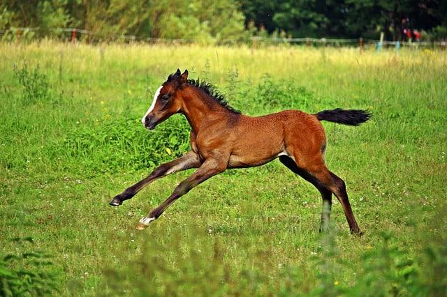 horse 2510189 640 - Play Like a Foal!